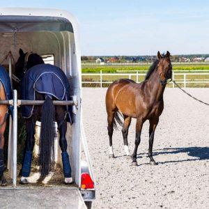 Kostenlose Checkliste Pferdeanhänger kaufen