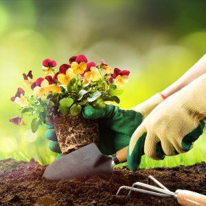 Unsere kostenlose Checkliste zur Gartenarbeit im Frühjahr
