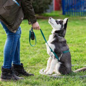 So einfach geht´s mit den Hundeerziehung Tipps
