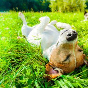 Hilfreiche Tipps gegen Frühjahrsmüdigkeit