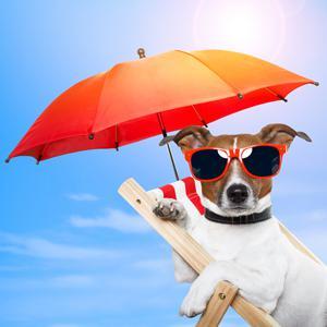 Hund entspannt im Urlaub